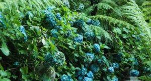 Растительность для голубого сада